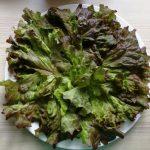 Teller Salat